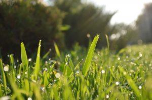 grass 364116 1920 300x199 - 寒暖差に気をつけるワケ