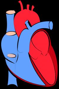 human heart 1700453 1280 200x300 - 君の膵臓を食べたい