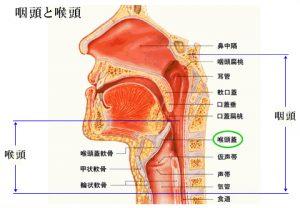 kohtohgai 300x208 - 喉頭蓋炎(こうとうがいえん)になってしまいました